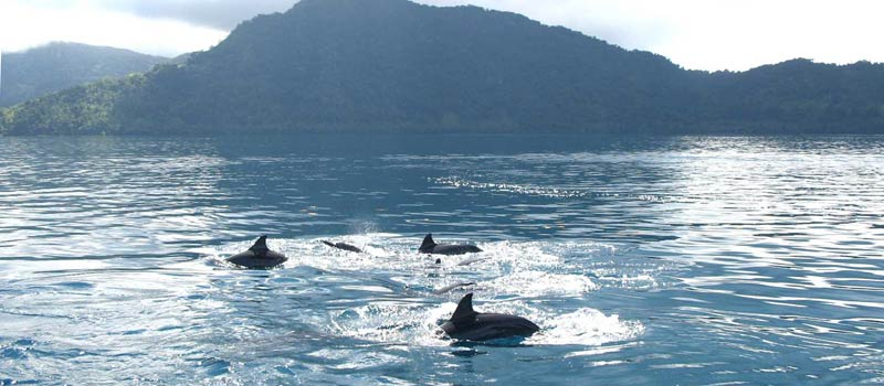 Take a boat trip on Nateway Bay to spot the resident spinner dolphins.